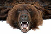 Ковёр из шкуры медведя (черный)