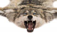 Ковёр из шкуры волка (серо-коричневый)